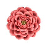 Wall Art Flower Pink image number 0