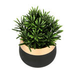 Artificial Plant Succulent In Cement Pot Green image number 1